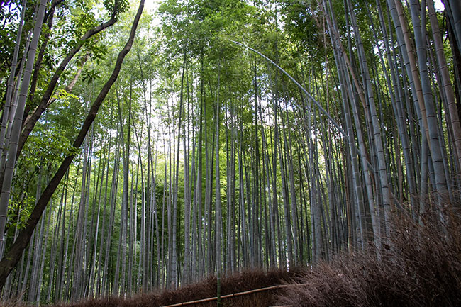 arashiyama-japon-traditionnel